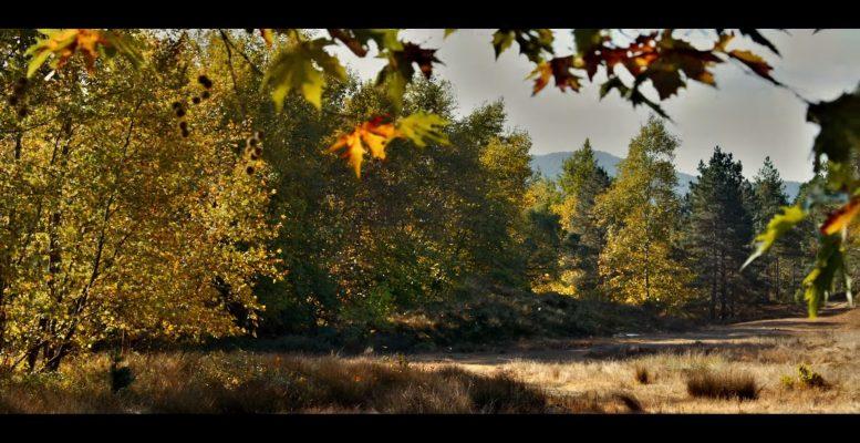 ahlat ağacı filmi